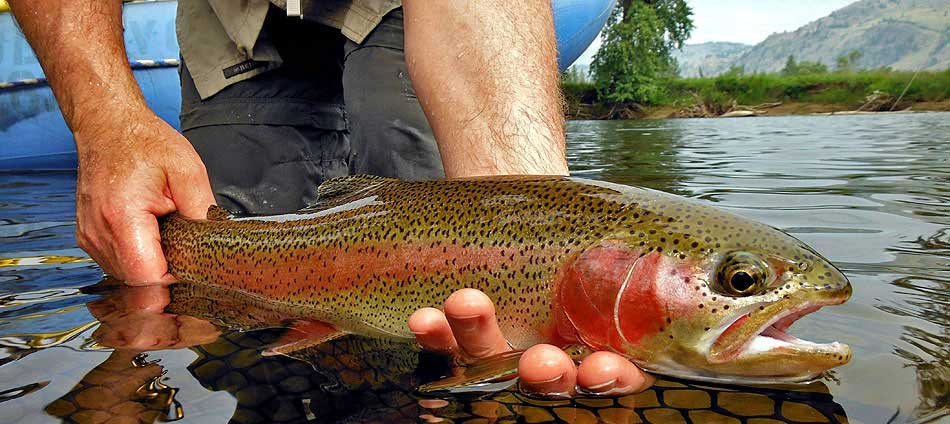 Kettle River Fishing and Guided Trips | The Evening Hatch